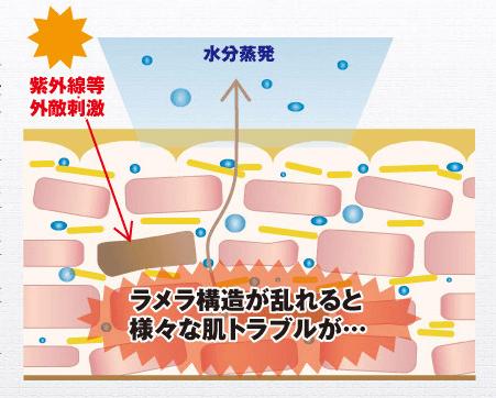 肌内部のラメラ構造を整えないと美容液の意味がない?ラメラ構造に働く「コンシダーマル スキンライズローション」って効果あるの?口コミも掲載